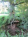 Tree of quarry edge -June 2012 - panoramio.jpg