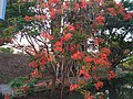 Tree with red flowers.jpg