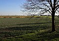 Trees and Field - geograph.org.uk - 330771.jpg