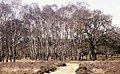Trees at Bishops Dyke New Forest - geograph.org.uk - 749246.jpg
