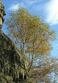 Trees at Froggatt Edge - geograph.org.uk - 589752.jpg
