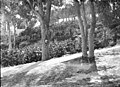 Trees in Taronga Park Zoological Gardens (34669869516).jpg