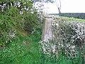 Triangulation pillar and hedgerow, Alkington - geograph.org.uk - 863111.jpg