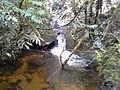 Trilha Uricanal - panoramio (3).jpg