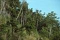 Tulagi, Solomon Islands. June 1995.jpg