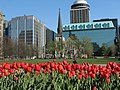 Tulips in downtown Ottawa from the 2006 Tulip Festival.JPG