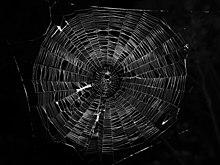 Spider Web Wikipedia