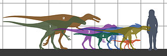 Tyrannosauroidea - Size of some small genera, compared to a human.