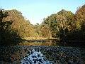 Upper Pond, Burnham Beeches - geograph.org.uk - 591146.jpg