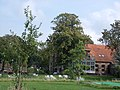 Veldzicht Westerlee - oude boerderij nu hotel - 1910 - 23.jpg
