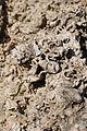 Velykyi-Hlybochok-vidslonennia-sarmatu-14090611.jpg