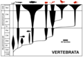 Vertebrate Phylogeny with Webbed-Footed Taxa Highlighted.png