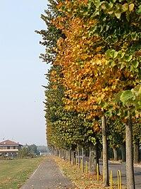 Viale Roma in autunno - Vidardo.jpg