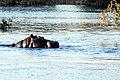 Victoria Falls 2012 05 23 1407 (7421832282).jpg