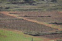 View from Tel Shiloh IMG 3014.JPG