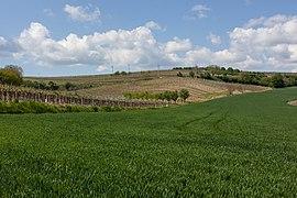 View of fields around Čejkovice (Hodonín District) 2020.jpg