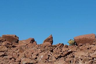 Viscacha - Image: Viscacha in the morning sun