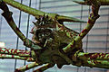 WLANL - thedogg - Japanse reuzenkrab.jpg