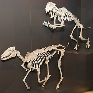 Pennington County, South Dakota - Extinct Mesohippus horse, found in Pennington County, on display at the Houston Museum of Natural Science.