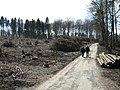Wald u. Diederichsburg bei Melle 2008.JPG