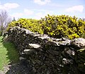 Wall Stile and Gorse - geograph.org.uk - 164189.jpg