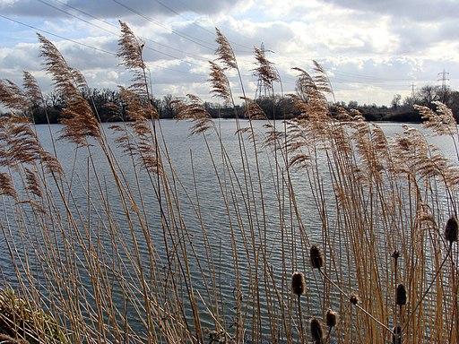 Walthamstow-Reservoir-758
