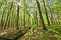 Wambachtal und Oembergmoor Naturschutzgebiet in Mülheim an der Ruhr 01.jpg