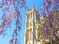 Washington National Cathedral with Blossoms.jpg