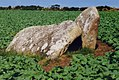 West Lanyon Quoit - geograph.org.uk - 1964991.jpg