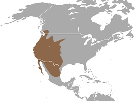 Western Spotted Skunk area.png