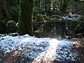 Wetlands and light snow by Lake Padden (33072461791).jpg