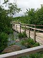 Whitefish Island boardwalk, 6 floodgates open 3.JPG