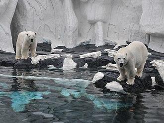 Wild Arctic - Image: Wild Arctic Sea World San Diego (2)