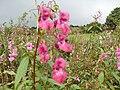 Wildflowers, Lochwinnoch, Renfrewshire. - panoramio.jpg