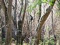 Wildlife's @ Wayanad wildlife Sanctuary - panoramio.jpg