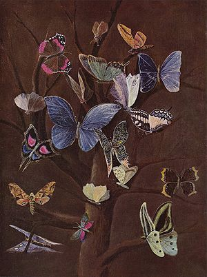 Wilhelm von Kaulbach - Schmetterlinge (Butterflies), c. 1860 (destroyed in 1945).