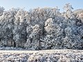 Winter-Regnitzaue-Bruderwald-PC310022.jpg