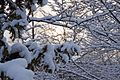 Wintermärchen im Maximilianpark Hamm (10570323825).jpg