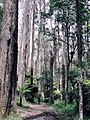 Wondering in the Dandenong ranges, VIC 2.jpg
