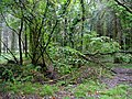 Woodland at Whitechapel Moors - geograph.org.uk - 1009430.jpg