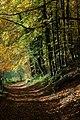 Woodland walk, Woodchester Park - geograph.org.uk - 1040070.jpg