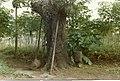 Work area under a tree near Yagala, Sierra Leone (West Africa) (748459065).jpg