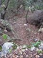 Yagur – Nesher, the Green Path – Mount Carmel 047.JPG