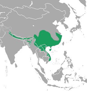 Yellow-bellied Weasel area