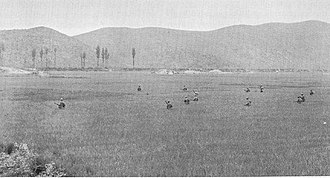 Second Battle of Naktong Bulge - US troops cross rice paddies during an attack west of Yongsan.