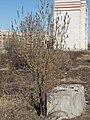 Yoshkar-Ola, Mari El Republic, Russia - panoramio (131).jpg