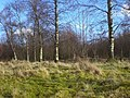 Young woodland - geograph.org.uk - 722091.jpg