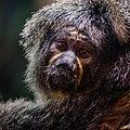Zürich Zoo DSC 6813-1 (16274069755).jpg