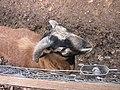 Zoo des 3 vallées - Animaux - 2015-01-02 - i3358.jpg