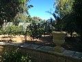 """""""000 San Anton Palace Garden 020"""".jpg"""